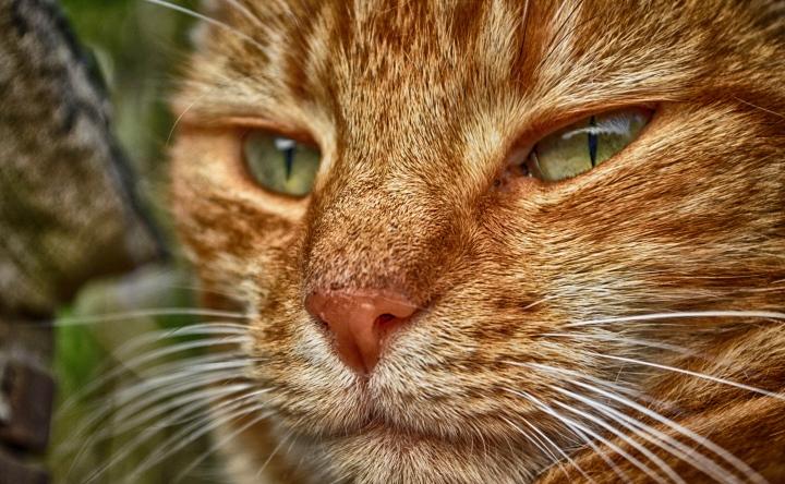 dsc_0164_hdr_cat