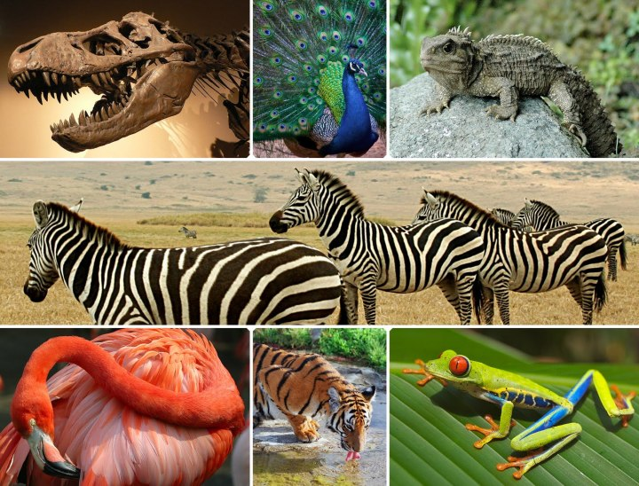 BiodiversityCollage
